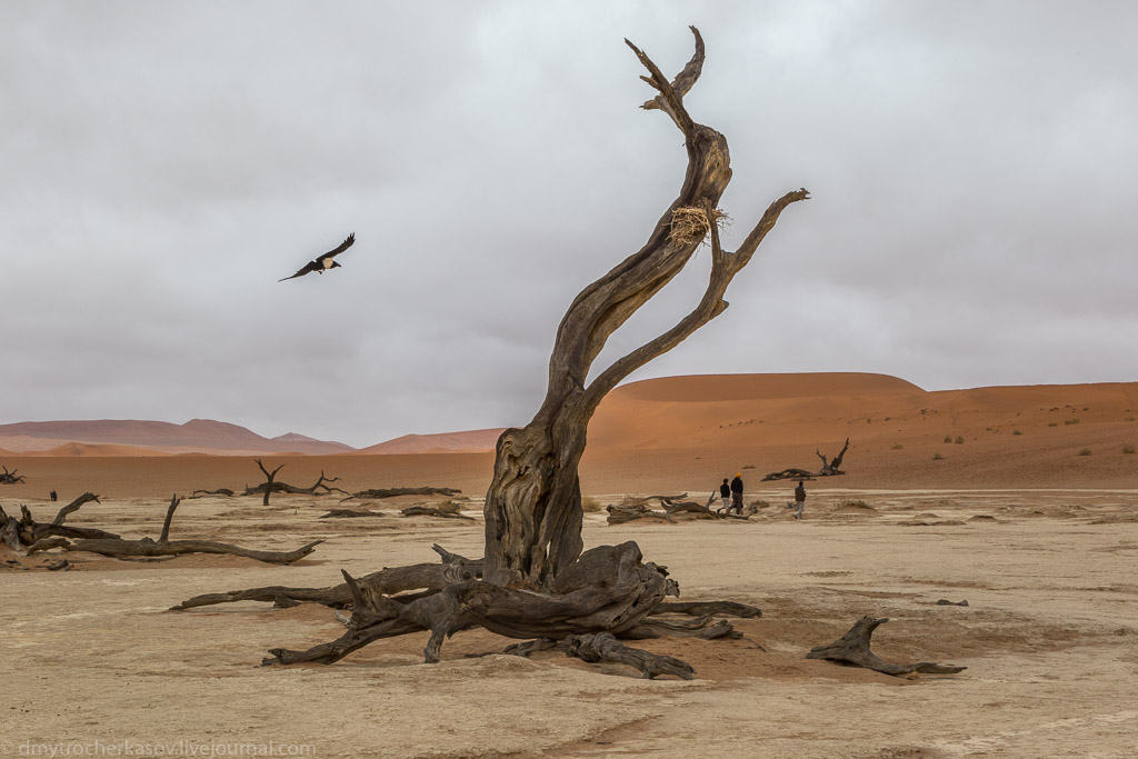 Namibia. Dead swamp 01
