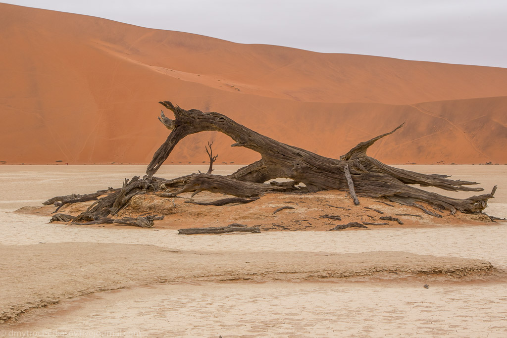 Namibia. Dead swamp 07