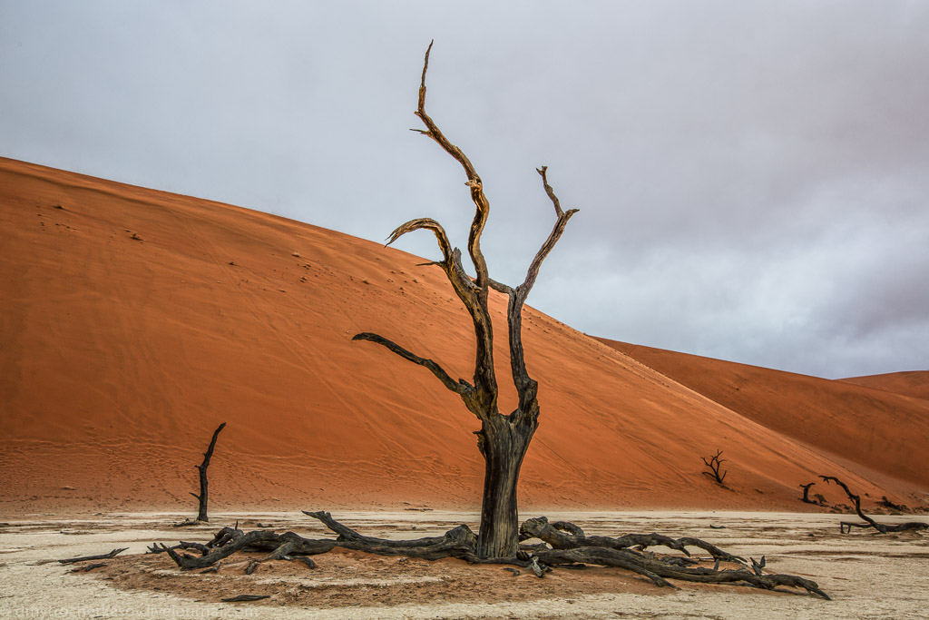 Namibia. Dead swamp 09