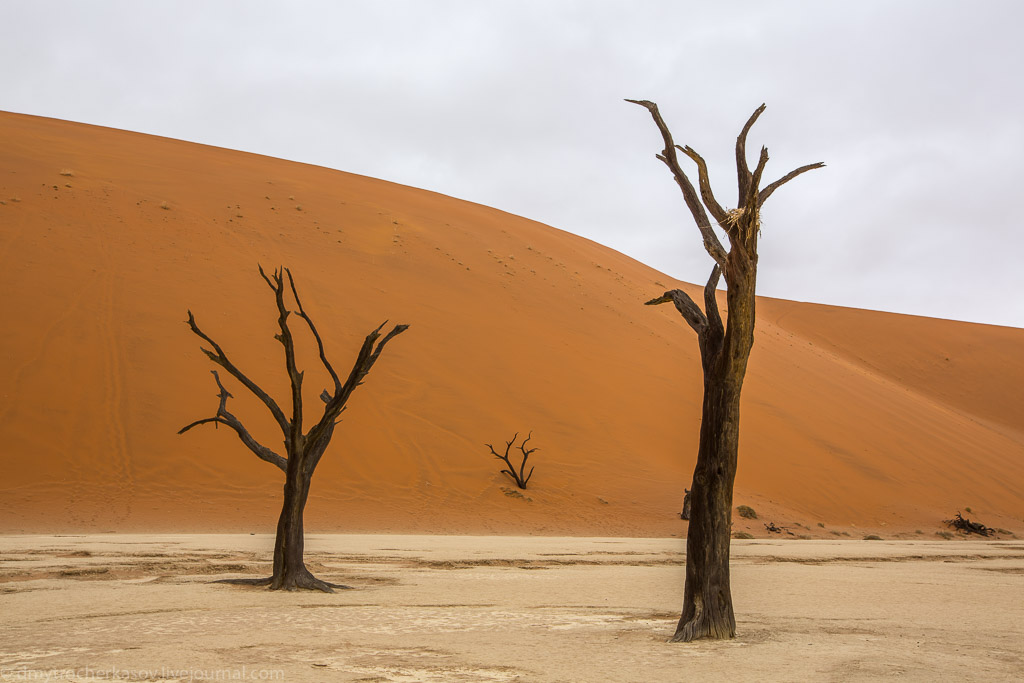 Namibia. Dead swamp 13