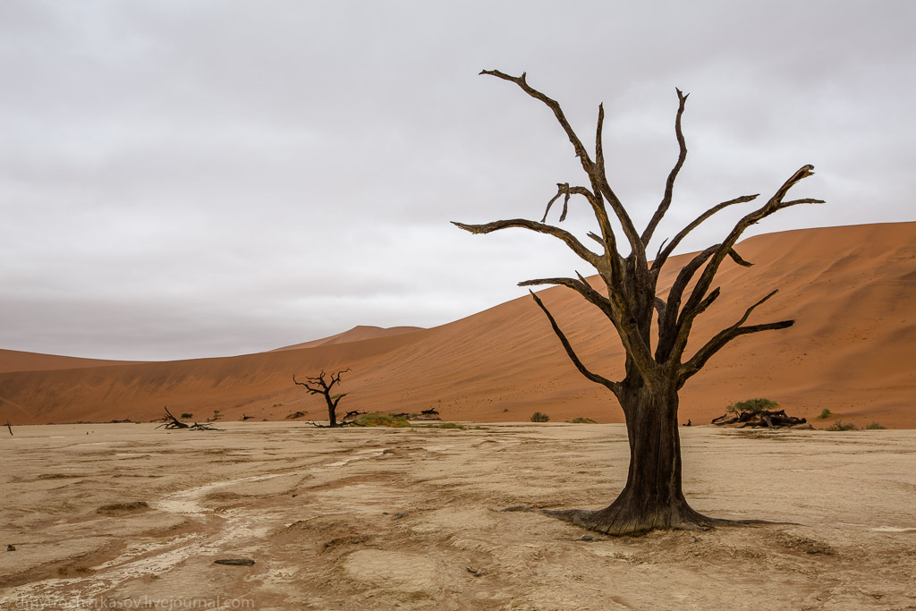 Namibia. Dead swamp 14