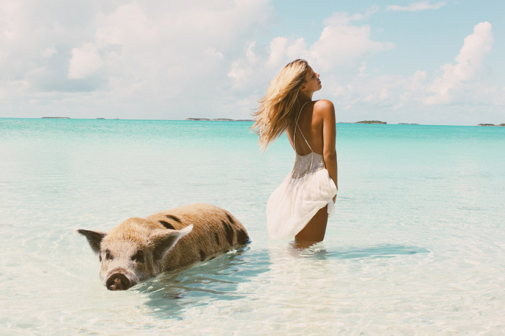 Pigs in the Bahamas 10