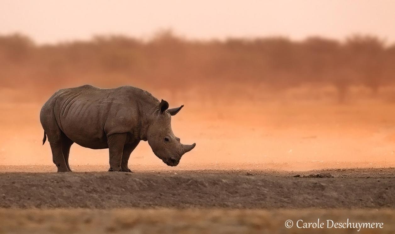Rhino_05