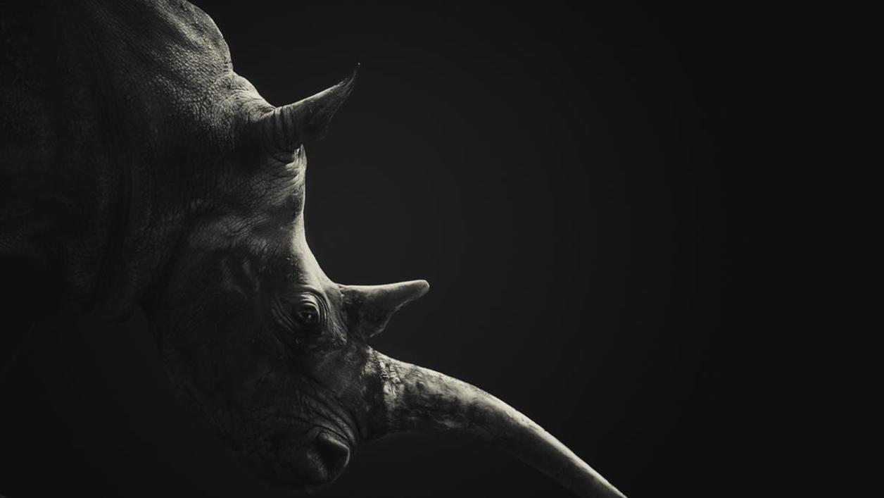 Rhino_07