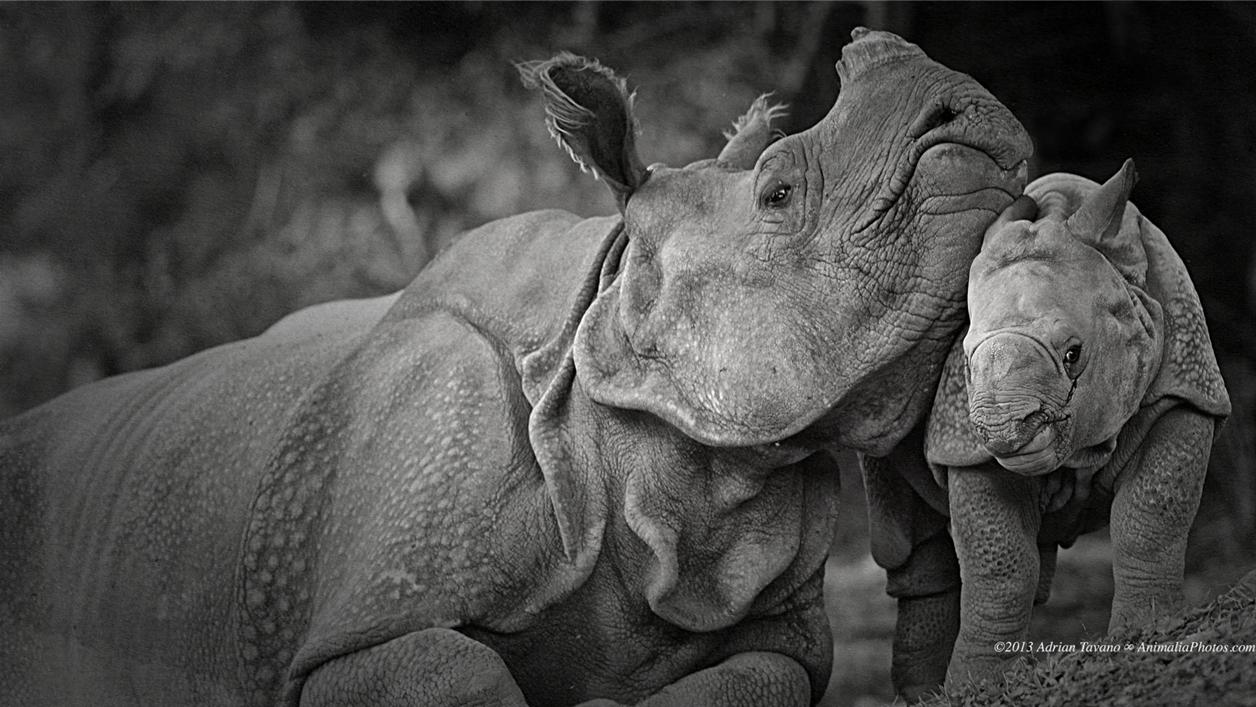 Rhino_09