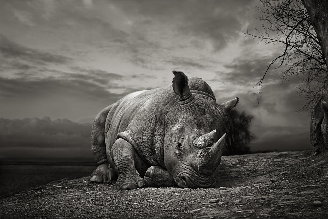 Rhino_12