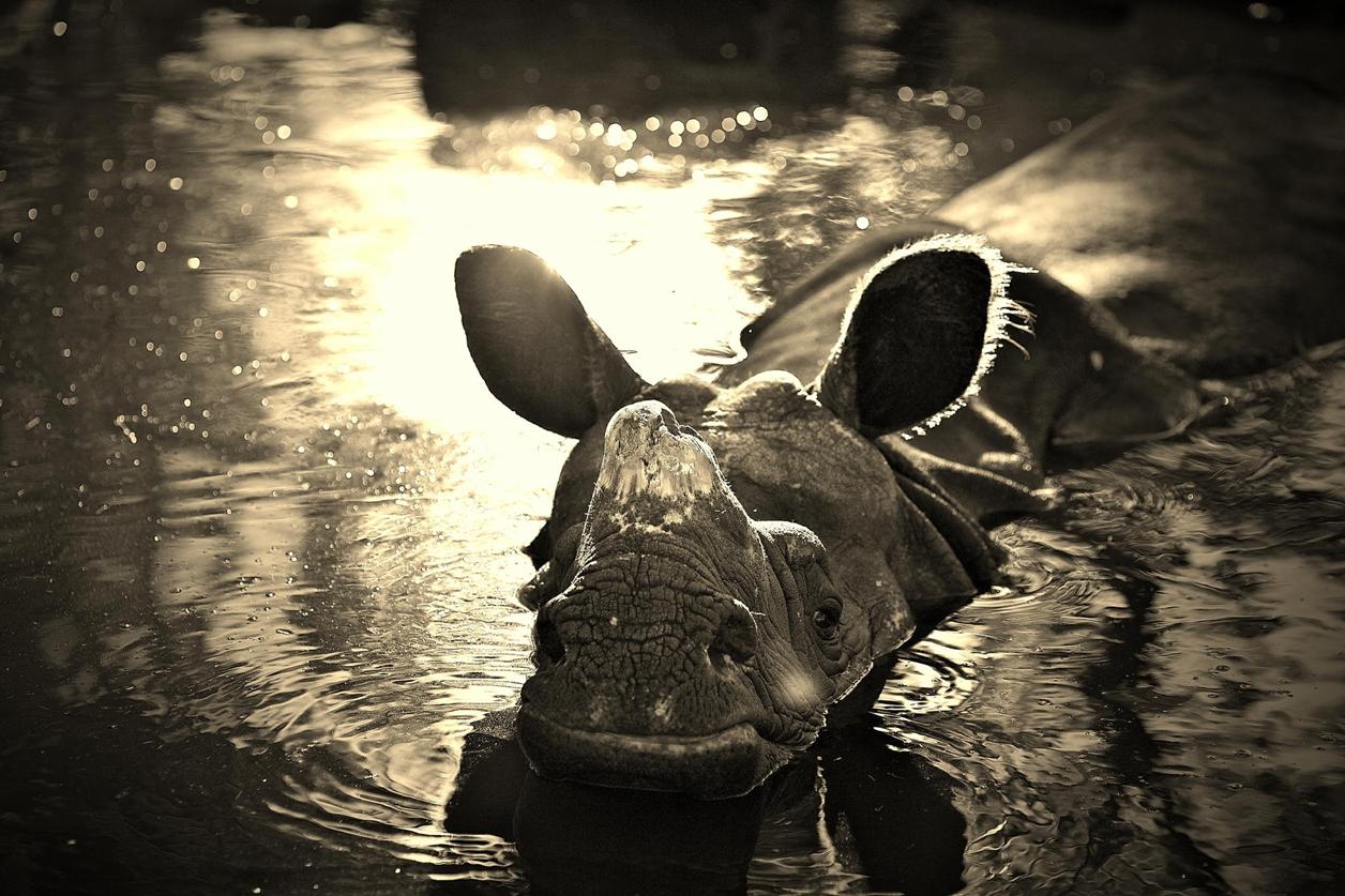 Rhino_16