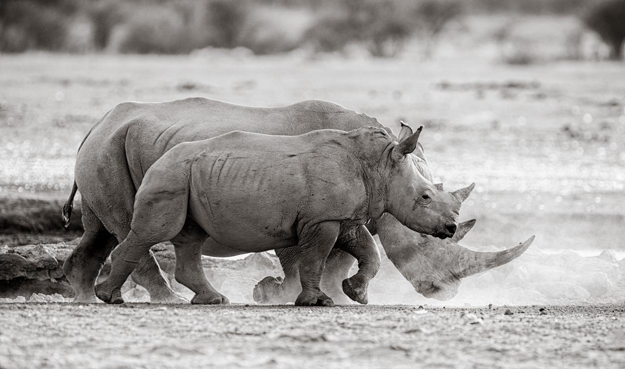 Rhino_17