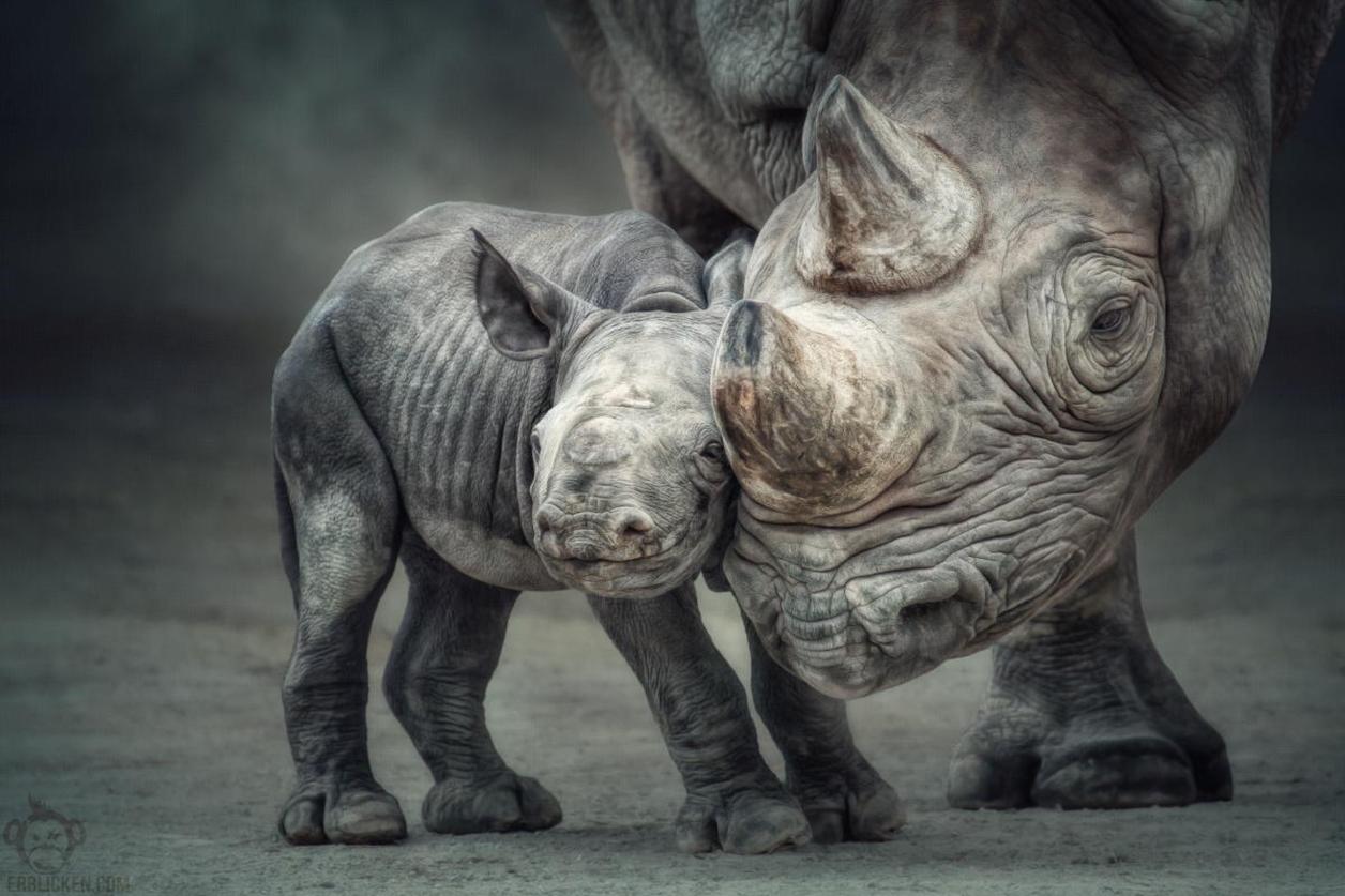 Всемирный день носорога