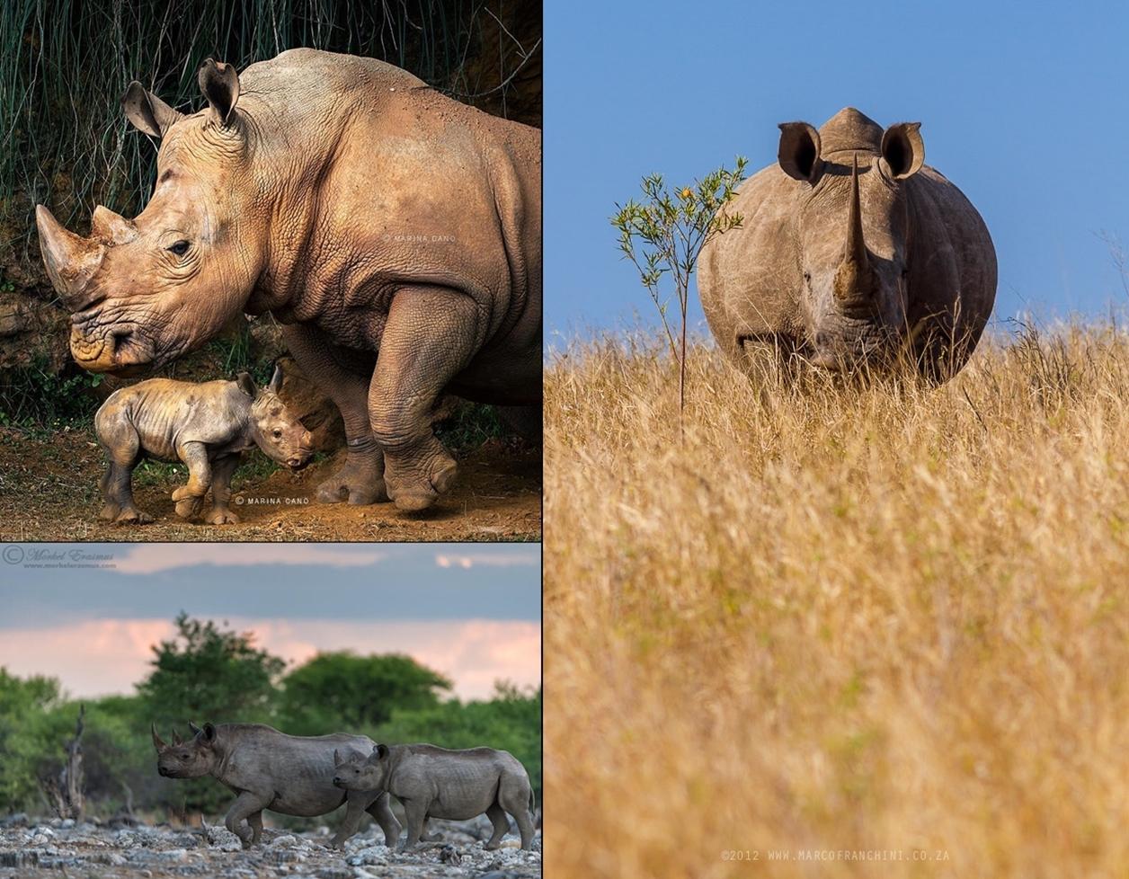 Rhino_22