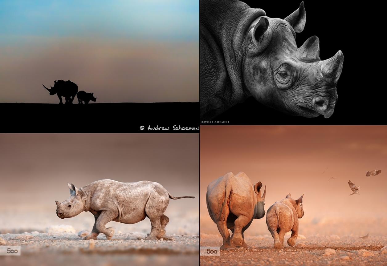 Rhino_24