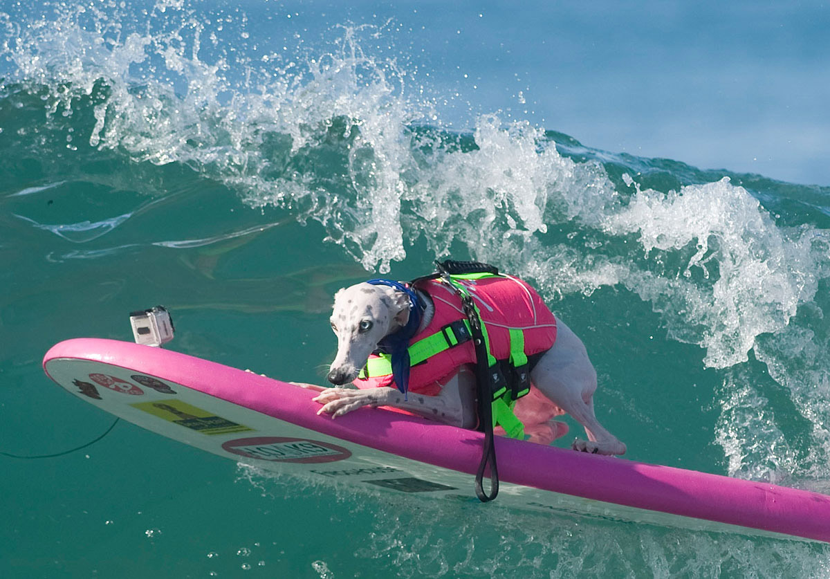 Surf's up for these dogs in Southern California_01