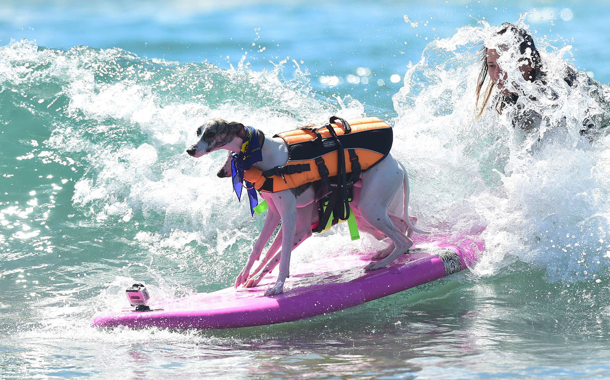 Surf's up for these dogs in Southern California_04