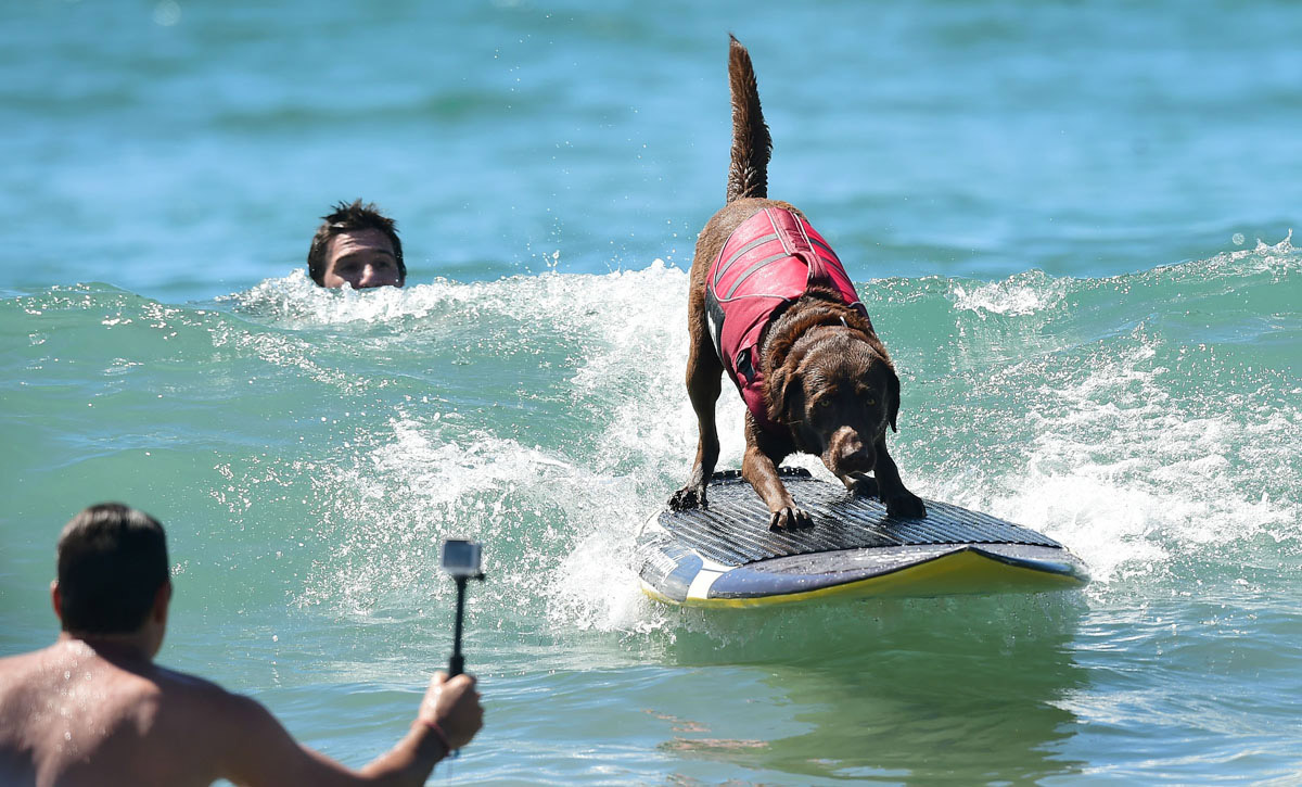 Surf's up for these dogs in Southern California_10