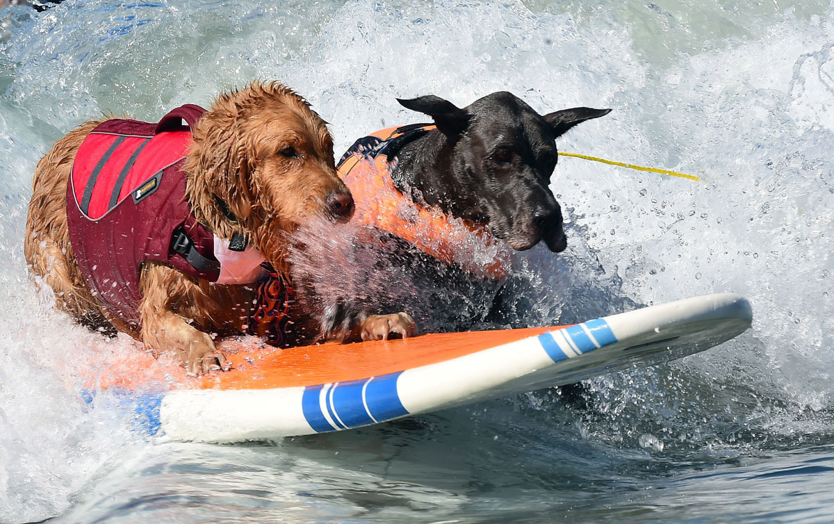 Surf's up for these dogs in Southern California_11