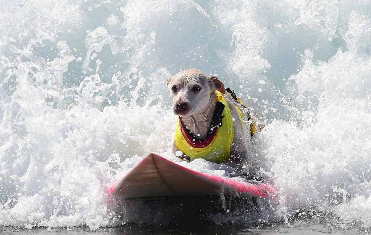 Surf's up for these dogs in Southern California_12
