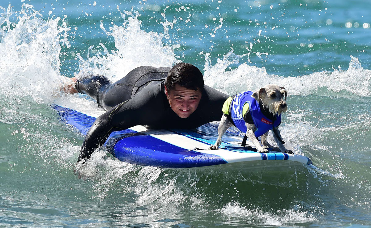 Surf's up for these dogs in Southern California_13