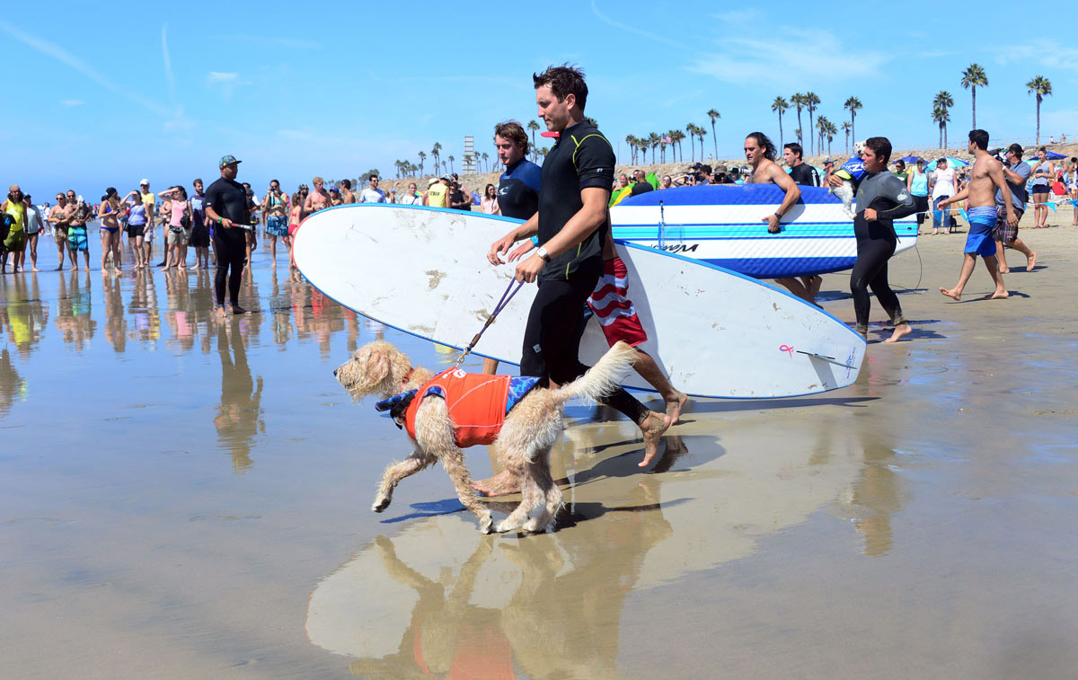 Surf's up for these dogs in Southern California_14