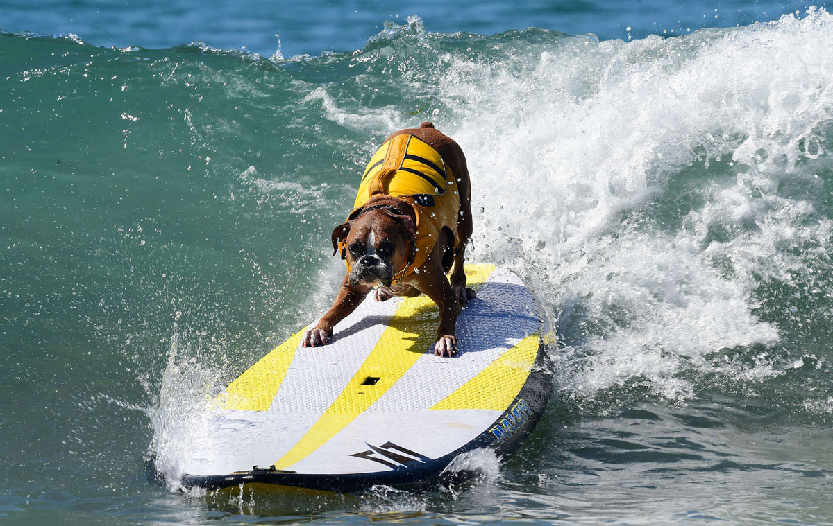 Surf's up for these dogs in Southern California_15