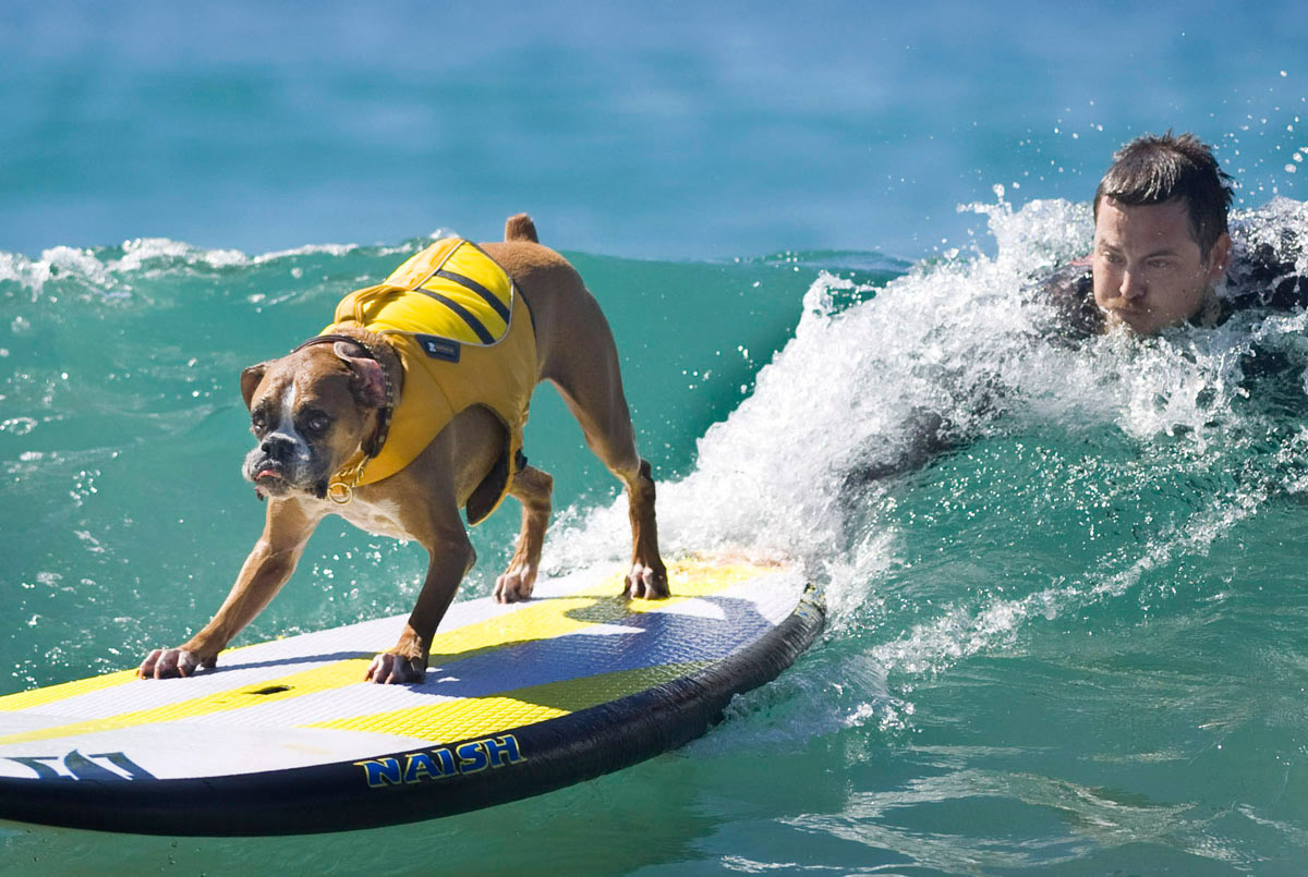 Surf's up for these dogs in Southern California_16