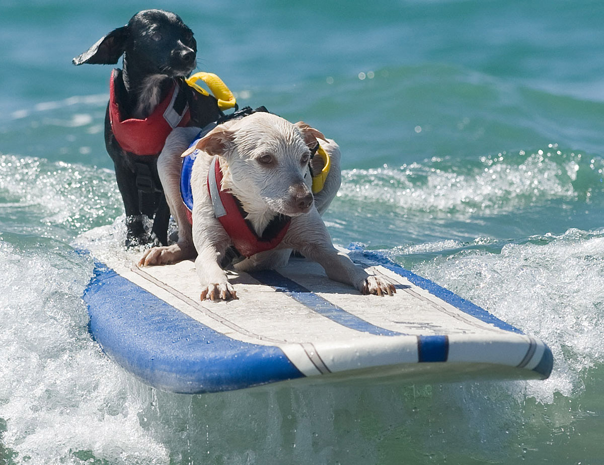 Surf's up for these dogs in Southern California_17