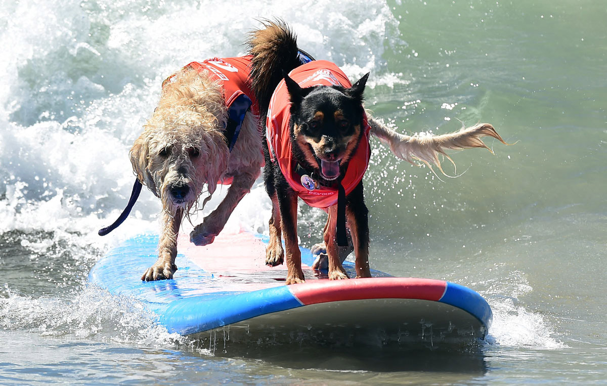 Surf's up for these dogs in Southern California_20
