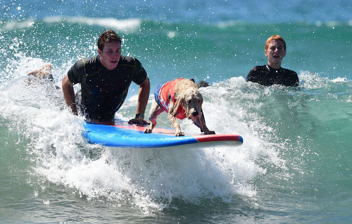 Surf's up for these dogs in Southern California_21