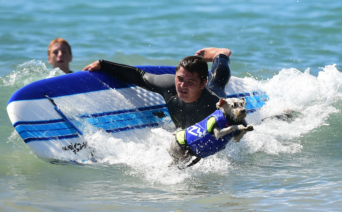 Surf's up for these dogs in Southern California_22