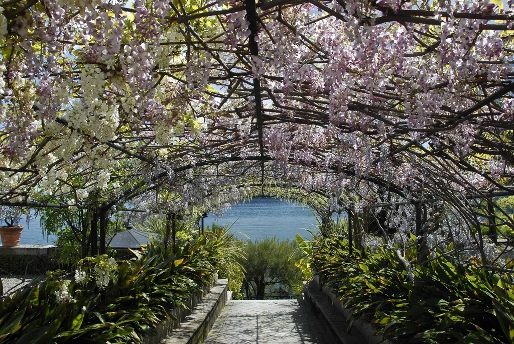 The gardens of Isola Bella 06