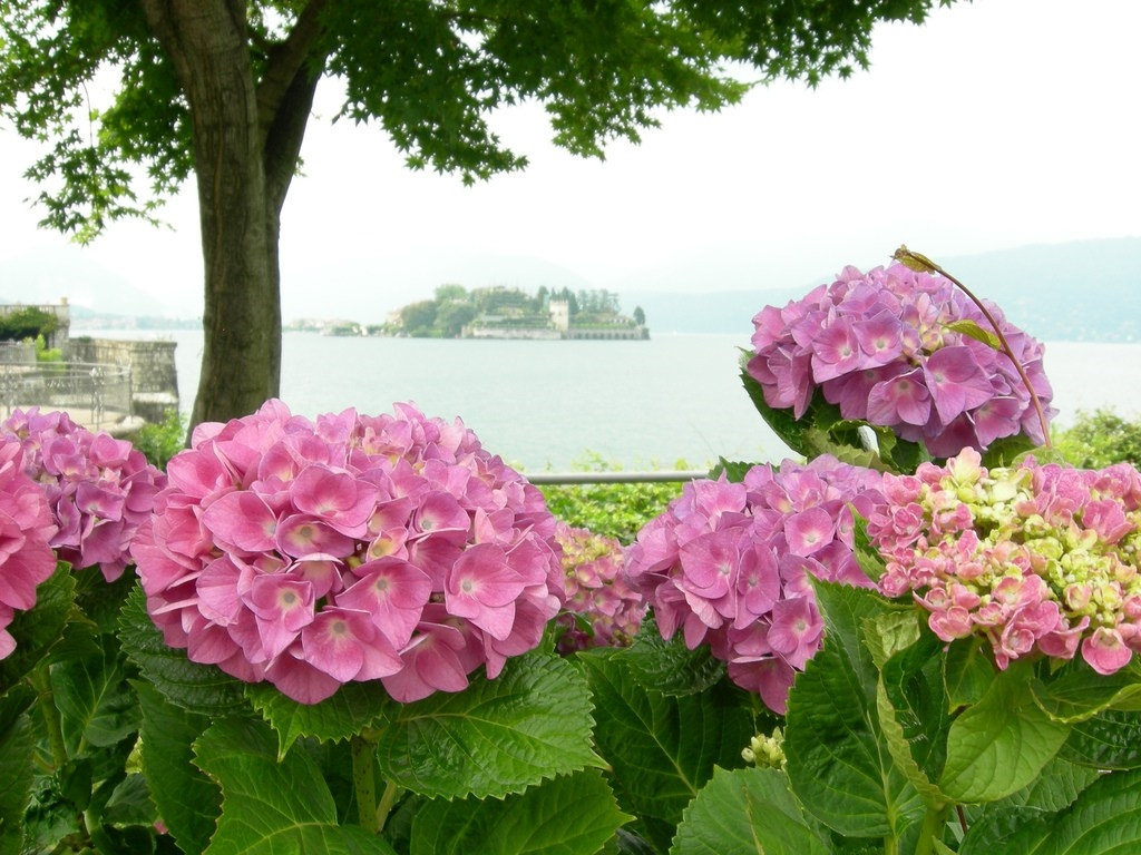 The gardens of Isola Bella 25