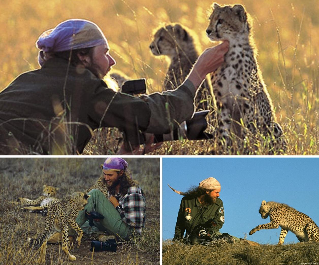 cheetahs 02