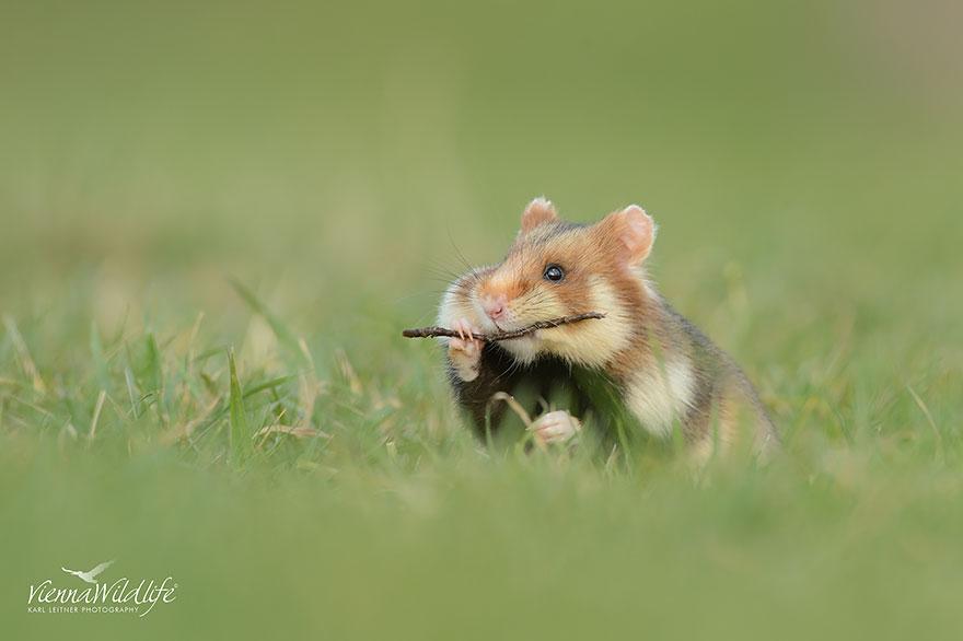 cute-hamsters-10__880