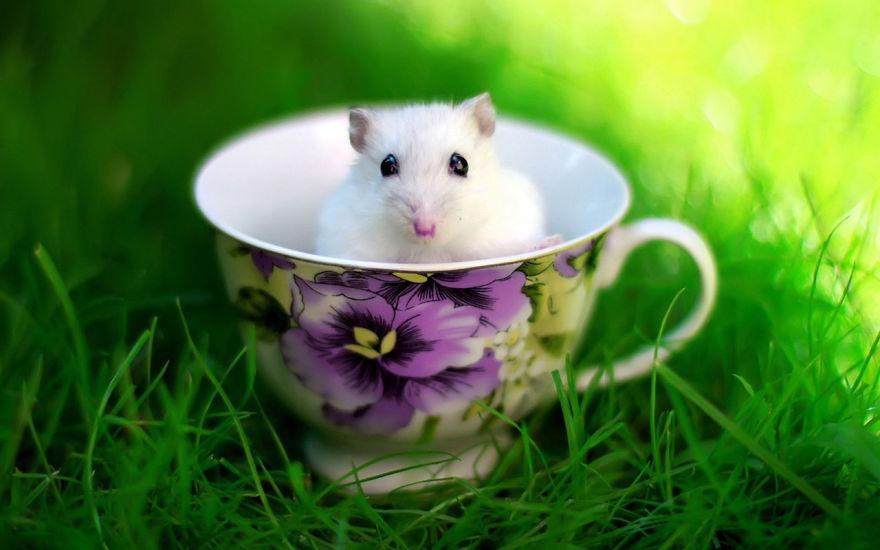 cute-hamsters-14__880
