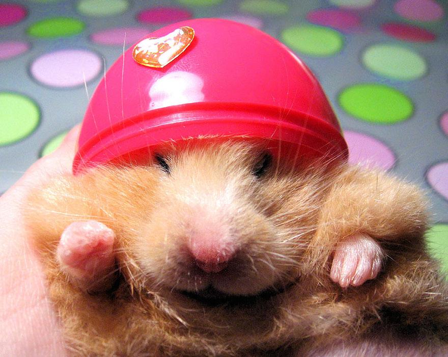 cute-hamsters-251__880