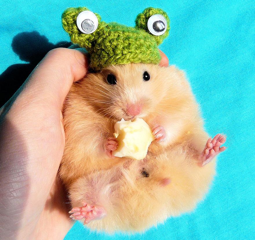 cute-hamsters-271__880