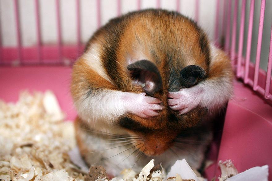 cute-hamsters-27__880