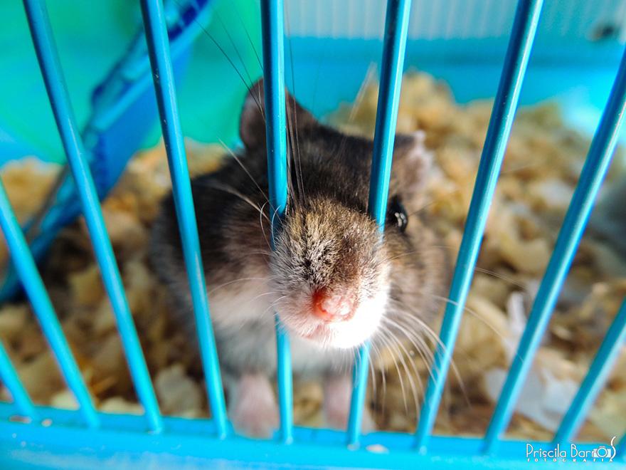 cute-hamsters-331__880