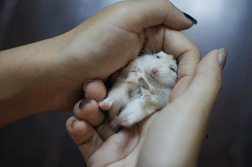 cute-hamsters-37__880