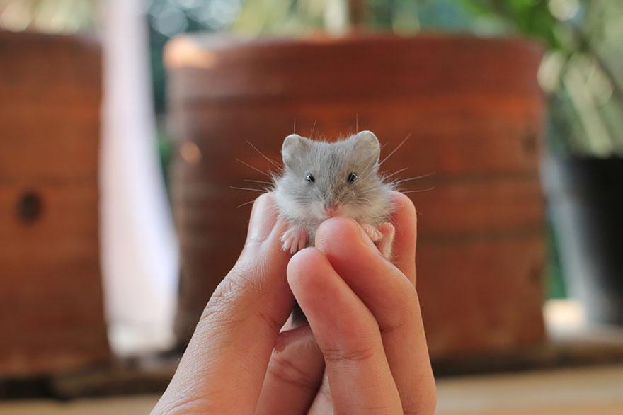 cute-hamsters-51__880