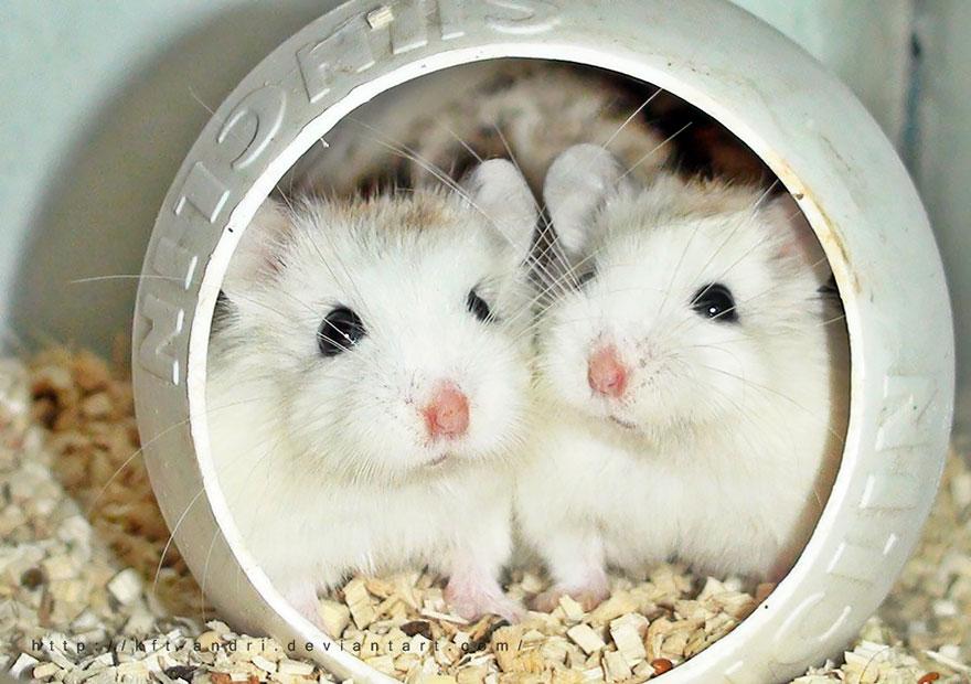 cute-hamsters-55__880
