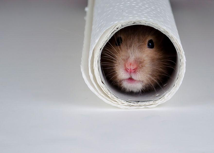 cute-hamsters-5__880