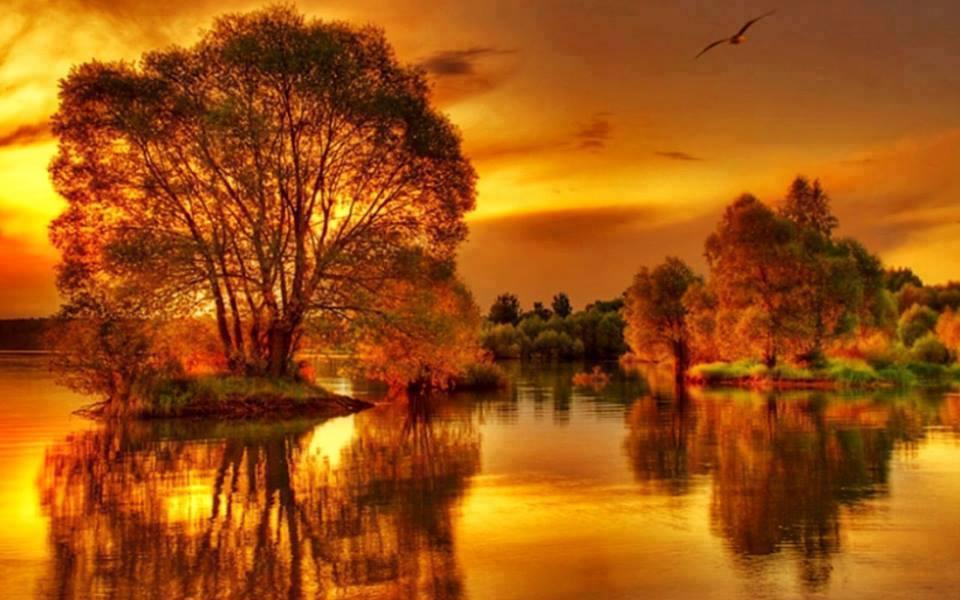 gold autumn 03