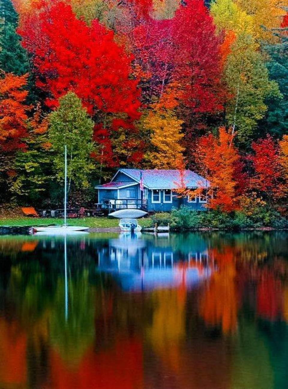 gold autumn 04
