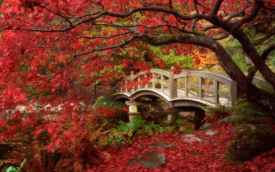 gold autumn 09