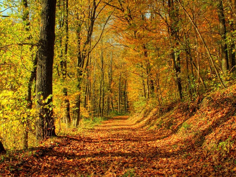 gold autumn 12