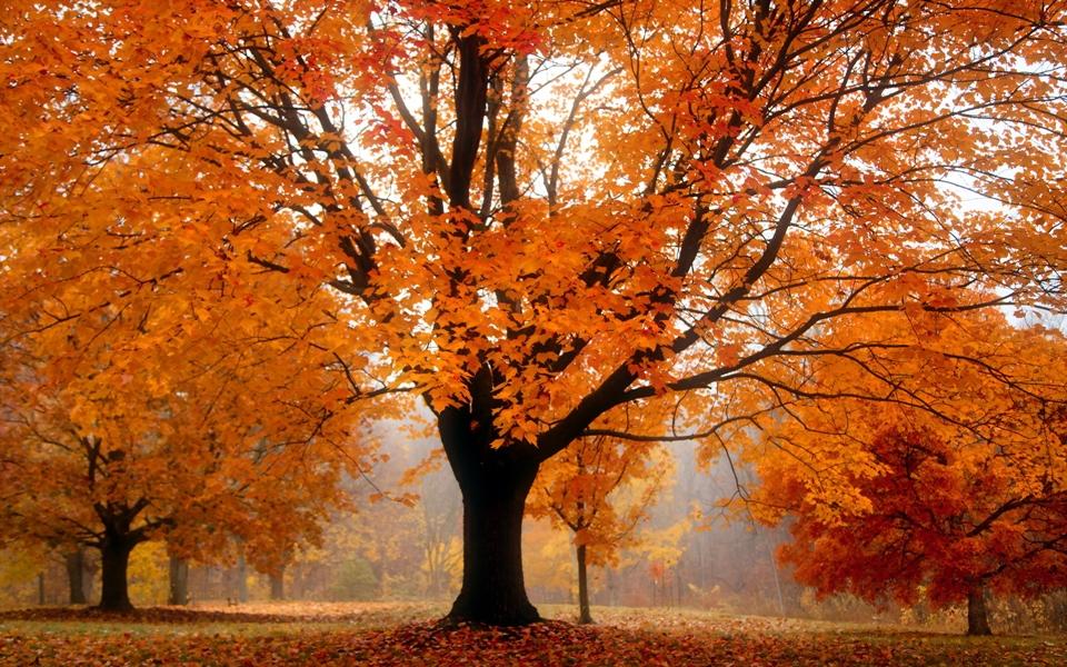 gold autumn 14