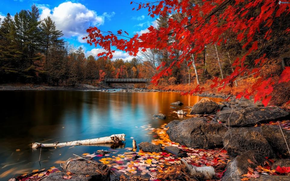 gold autumn 15