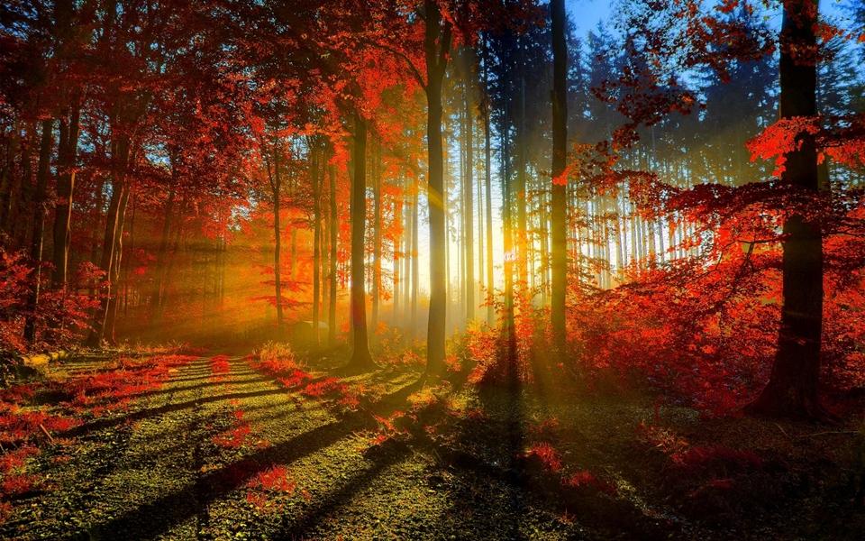 gold autumn 16