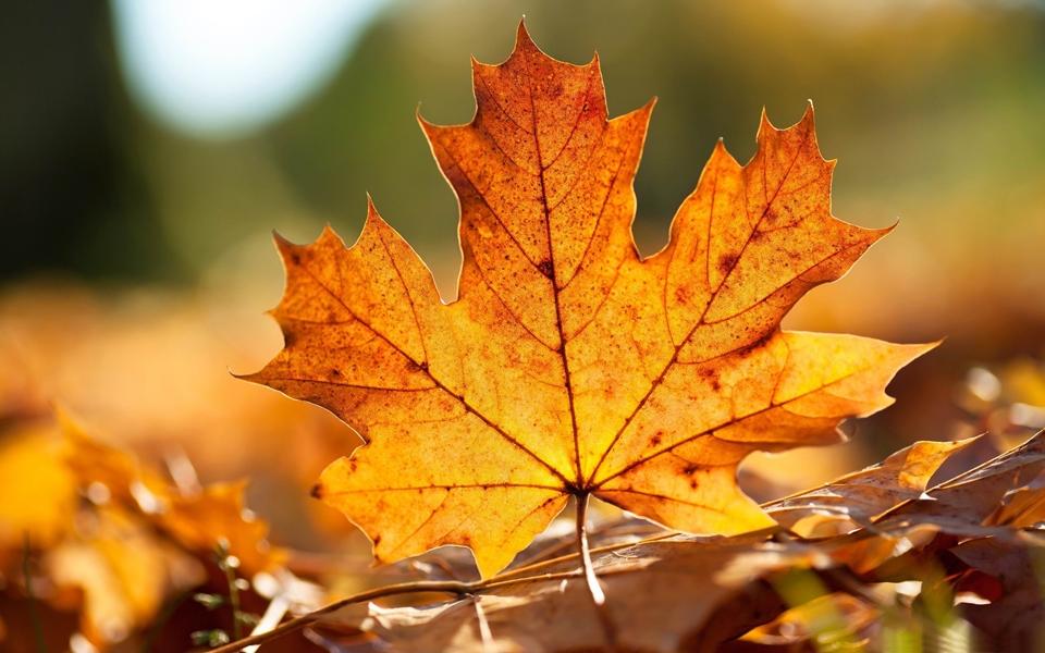 gold autumn 17