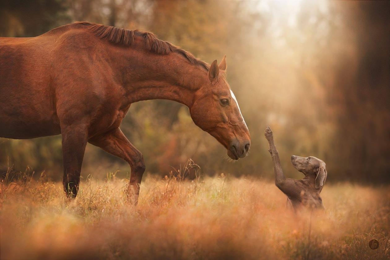 Завораживающая красота лошадей